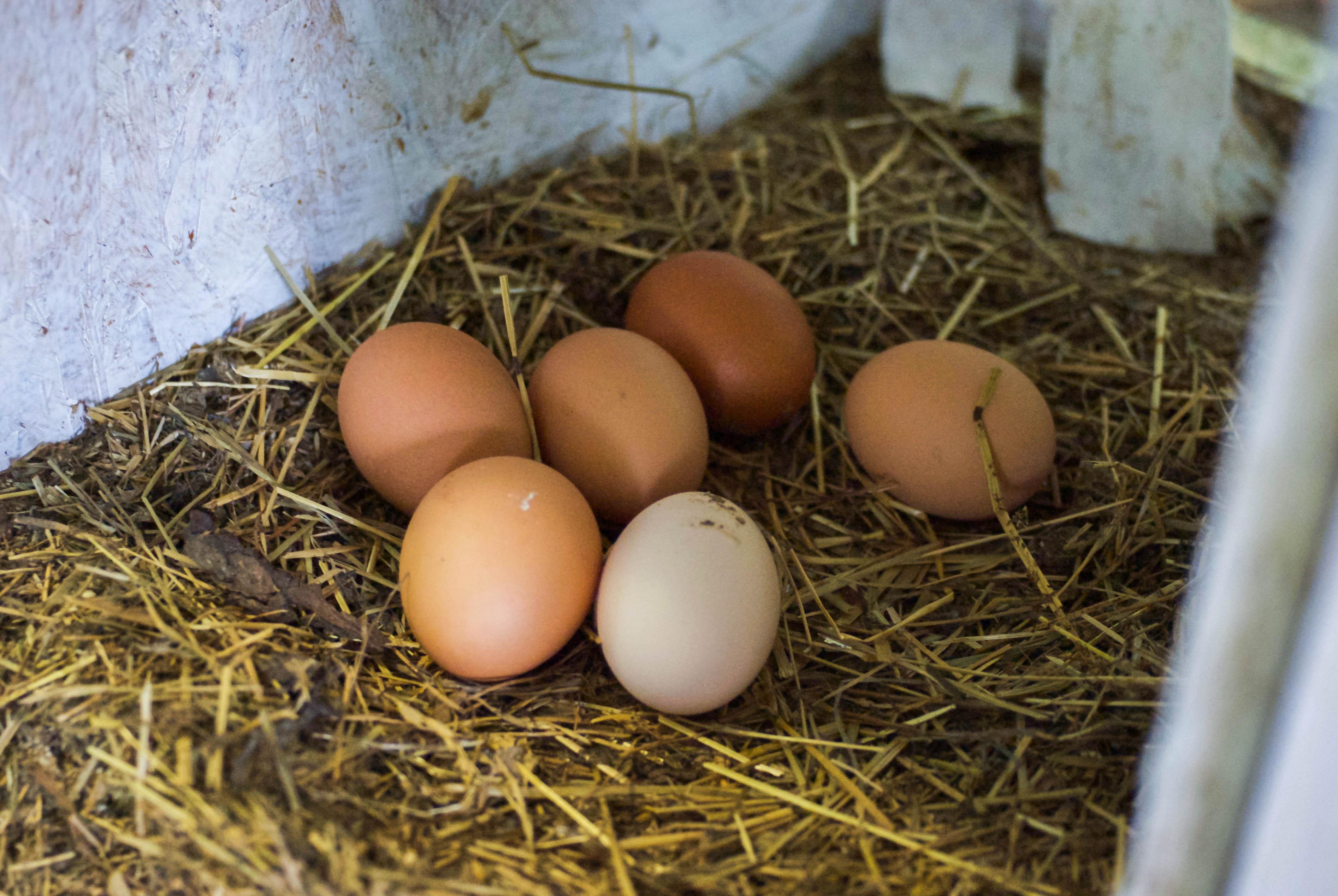"""""""Рябинки"""": как я первый раз в жизни побывала на эко-ферме"""